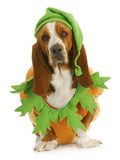 Dog Dressed Up for Halloween - Basset Hound Wearing Pumpkin Costume Sitting Prints by Willee Cole