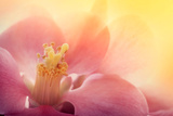 Pink Flower Macro Poster by  mythja