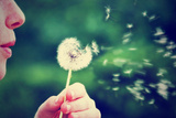 A Girl Blowing on a Dandelion Prints by  graphicphoto
