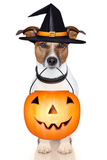 Halloween Pumpkin Witch Dog Photographic Print by Javier Brosch