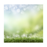 Spring or Summer Season Abstract Nature Background with Grass and Blue Sky in the Back Poster by Krivosheev Vitaly