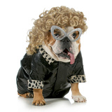 Female Dog - English Bulldog Wearing Blonde Wig and Black Leather Coat Photographic Print by Willee Cole