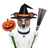 Halloween Pumpkin Witch Dog Prints by Javier Brosch