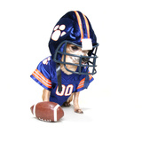A Tiny Chihuahua in a Football Uniform Photographic Print by  graphicphoto