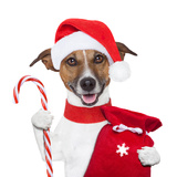 Christmas Dog Photographic Print by Javier Brosch