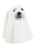 A Dog Dressed Up as a Spooky Ghost Print by  graphicphoto