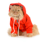 Cat Wearing Red Coat Photographic Print by Willee Cole