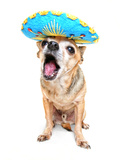 A Cute Chihuahua in a Halloween Costume Posters by  graphicphoto
