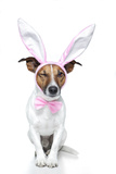 Bunny Dog Easter Poster by Javier Brosch