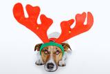 Dog as Deer Posters by Javier Brosch