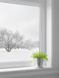 Green Plant and Winter Landscape Seen Through the Window Posters by  GoodMood Photo