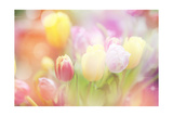 Beautiful Tulips Made with Color Filters Posters by Timofeeva Maria