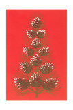 Array of Pine Cones Posters