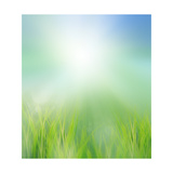 Green Field in Morning Light Art by  khunaspix
