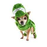 A Cute Chihuahua Dressed Up as a Dinosaur Photographic Print by  graphicphoto