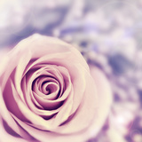 Dreamy Rose Abstract Background, Beautiful Fresh Violet Flower Posters by Anna Omelchenko