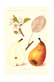 Clairgeaus Pears Posters