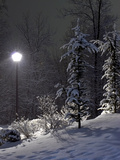 The Fir and Street Lamp Photographic Print by  izanoza
