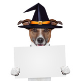 Halloween Placeholder Banner Dog Prints by Javier Brosch