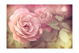 Abstract Romantic Pink Roses Flowers with Water Drops Prints by Im Perfect Lazybones