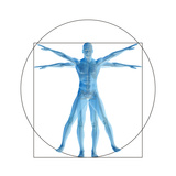 Vitruvian Human or Man, Anatomy Body for Biology Prints by  bestdesign36