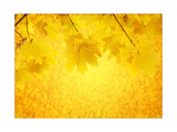 Autumn Background Posters by  frenta