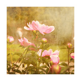 Art Floral Vintage Background with Pink Peonies Prints by Irina QQQ