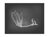 Card with Magnolia Flower on Chalkboard Prints by  tukkki