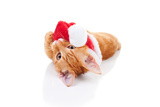 Christmas Cat Photographic Print by Stephanie Zieber