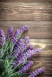 Lavendel Fotodruck von Sea Wave
