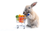 Cute Bunny Shopping for His Favorite Snacks with Shopping Cart Photographic Print by  dzain
