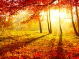 Autumn Trees and Leaves Fotodruck von Subbotina Anna