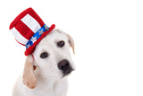 Patriotic Puppy Dog Photographic Print by Stephanie Zieber