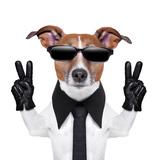 Cool Dog Reprodukcja zdjęcia autor Javier Brosch