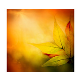 Autumn Background Prints by  mythja