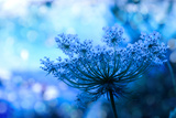 Wildflower Background Fotografisk tryk af  Malija