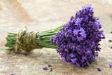 Bouquet of Fresh Lavenders Poster von Anna-Mari West