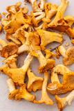 Chanterelle Mushrooms Fotografisk tryk af maksheb