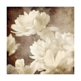 Art Floral Vintage Sepia Background with White Asters Art by Irina QQQ