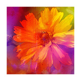 Art Floral Vintage Rainbow Background with Asters Prints by Irina QQQ