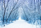 Winter Photographic Print by  WDG Photo