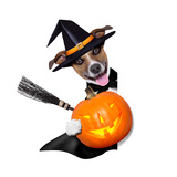 Halloween Witch Dog Prints by Javier Brosch