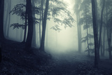 Light in a Forest with Fog Photographic Print by  ando6