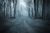 Road Trough a Dark Blue Forest with Fog Photographic Print by  ando6