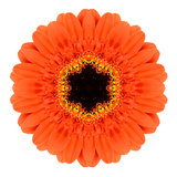 Orange Mandala Gerbera Flower Kaleidoscope Poster by  tr3gi