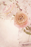 Ranunculus Flowers in a Vase Photographic Print by  egal
