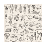 Hand-Drawn Vegetables Premium Giclee Print by  Nikiparonak