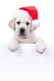 Christmas Banner Dog Photographic Print by Stephanie Zieber