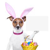 Funny Easter Dog Lámina fotográfica por Javier Brosch