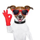 Ok Fingers Dog Fotografisk tryk af Javier Brosch